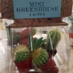 Trader Joe's Mini Greenhouse Cactus