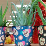 Trader Joe's Sugar Skull Air Plants