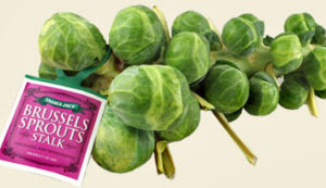 Trader Joe's Brussels Sprouts Stalk