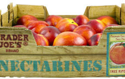 Trader Joe's Nectarines