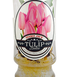 Trader Joe's Tulip Bulbs