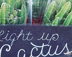 Trader Joe's Light Up Cactus