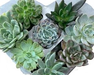 Trader Joe's Heart Shaped Succulents Planter