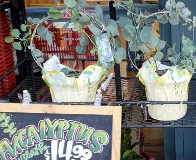 Trader Joe's Eucalyptus Wreath