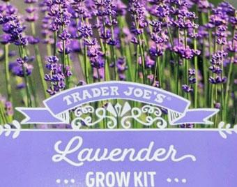 Trader Joe's Lavender Grow Kit