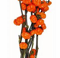 Trader Joe's 5-Stem Pumpkin Trees Reviews