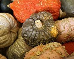 Trader Joe's Mixed Autumn Colored Pumpkins