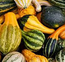 Trader Joe's Assorted Gourds