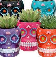 Trader Joe's Grande Succulent Skulls