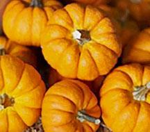 Trader Joe's Mini Orange Pumpkins