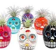 Trader Joe's Mini Succulent Skulls