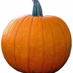 Trader Joe's Orange Pumpkins Reviews