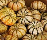 Trader Joe's Mini Tiger Striped Pumpkins
